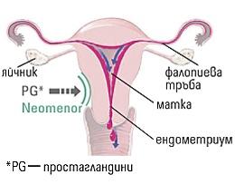 bolki pri menstraciq